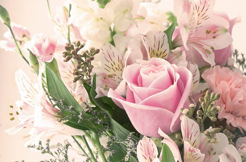 Ce flori oferim la diferite ocazii?