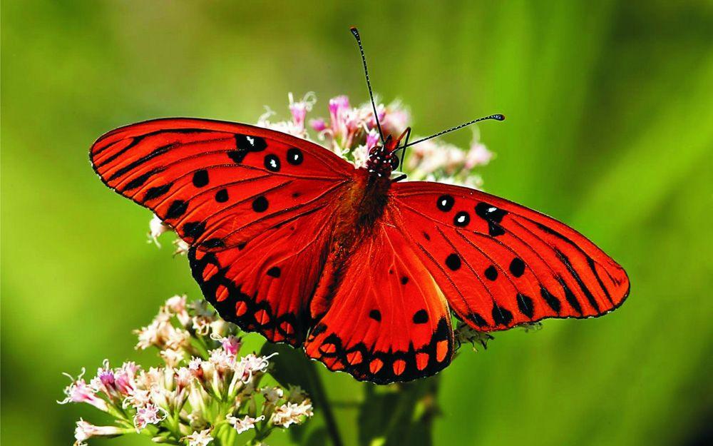 poezia fluturasul