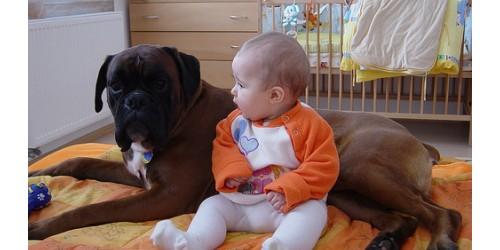 copiii-si-cainii